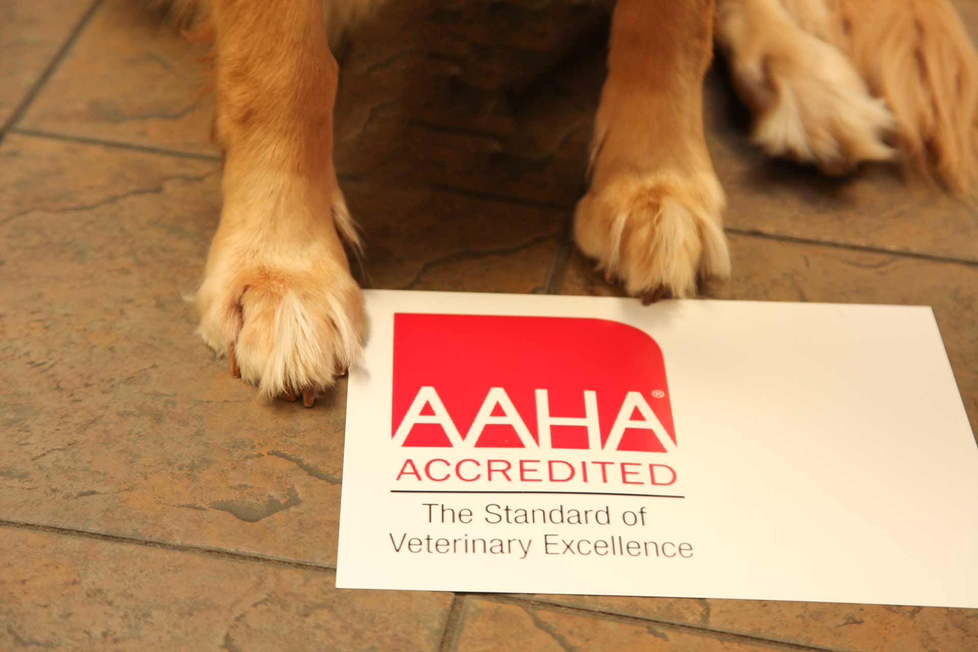 Dog On AAHA Sign