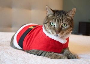 The Christmas Season is in full swing!